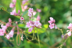 Цветок в Казахстане Стоковое фото RF