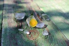 Цветок в льде стоковые изображения rf