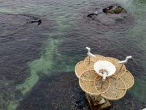 Цветок в море стоковое фото rf