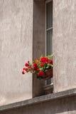 Цветок в доме Парижа Стоковые Изображения RF