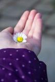 Цветок в открытой руке Стоковая Фотография
