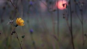 Цветок в поле видеоматериал