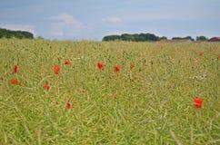 Цветок в поле Стоковое фото RF