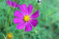 Цветок в предпосылке сада стоковые фотографии rf