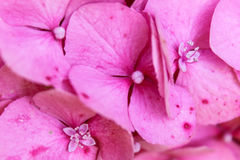 Цветок в предпосылке сада стоковое фото