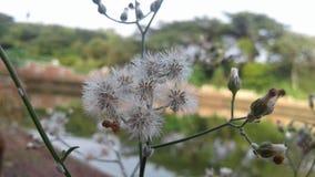 Цветок в пруде стоковое изображение rf