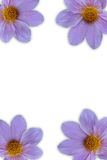 Цветок в рамке Стоковая Фотография RF