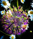 Цветок в рассвете Стоковые Изображения RF