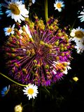 Цветок в рассвете Стоковые Изображения