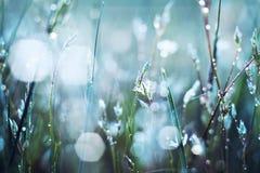 Цветок в росе стоковые фотографии rf