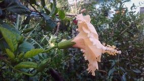 Цветок в саде смотрит настолько красивым стоковые изображения rf