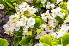 Цветок в саде Стоковая Фотография RF