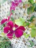 Цветок в саде стоковые фотографии rf