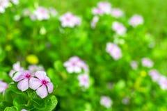 Цветок в саде Стоковая Фотография