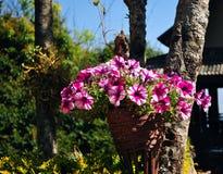 Цветок в саде Стоковые Изображения RF