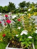 Цветок в саде стоковые изображения