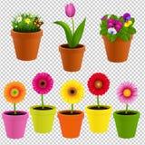Цветок в собрании бака Стоковая Фотография RF