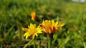 Цветок в солнце стоковые фотографии rf