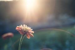 Цветок в солнце Стоковое Изображение