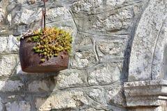 Цветок в старом, ржавом баке Стоковая Фотография RF