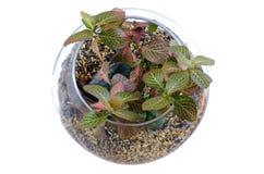 Цветок в стеклянной вазе Стоковое Фото