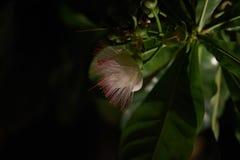 Цветок в темной предпосылке в nighttime стоковая фотография