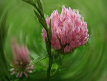 Цветок в траве Стоковые Изображения RF