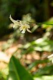 Цветок в тропическом Стоковое фото RF