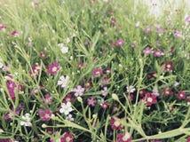 Цветок в утре Стоковое Изображение