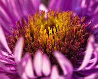 Цветок в лучах солнца Стоковая Фотография RF
