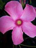 Цветок в цветени Стоковая Фотография