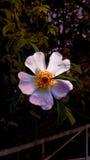 Цветок в центре стоковое фото rf