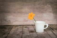 Цветок в чашке Стоковое Изображение RF