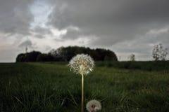 Цветок в шторме стоковая фотография