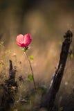 Цветок в glassland Стоковые Изображения