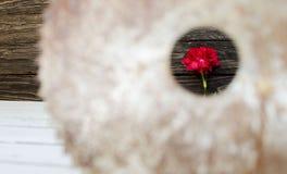 Цветок гвоздики в кольце круглой пилы Стоковое Изображение RF