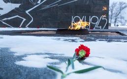 Цветок гвоздики задал к вечному пламени в памяти о солдатах стоковое изображение