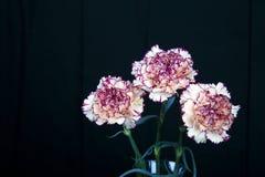 Цветок гвоздики на черной предпосылке, желтых цветках, весне Стоковое фото RF