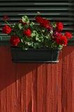 Цветок гераниума Стоковые Изображения RF