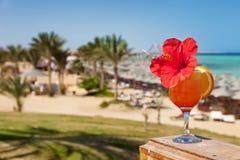 Цветок гибискуса на коктеиле в тропическом курорте стоковое фото