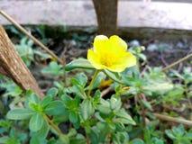 Цветок города Стоковое фото RF