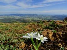 Цветок горы Стоковое Изображение