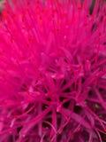 цветок горячий Стоковые Изображения