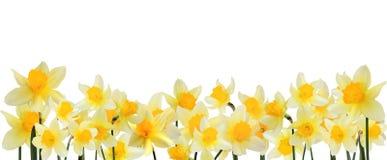 цветок граници Стоковое Изображение RF