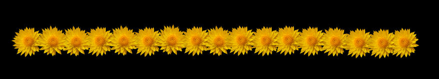 цветок граници Стоковые Фото