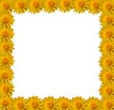 цветок граници Стоковое фото RF