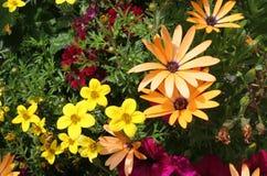 цветок граници Стоковые Фотографии RF