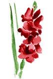 Цветок гладиолуса акварели Стоковое Изображение
