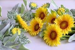 Цветок глины, букет солнцецвета Стоковое Изображение RF