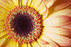 цветок детали стоковые изображения rf